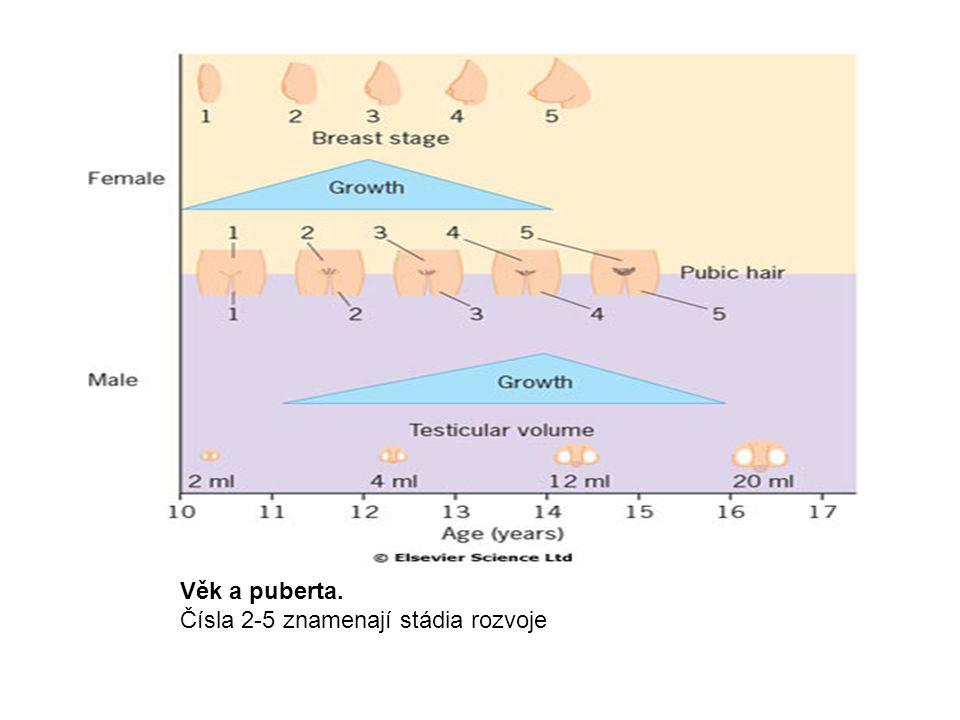 Věk a puberta. Čísla 2-5 znamenají stádia rozvoje