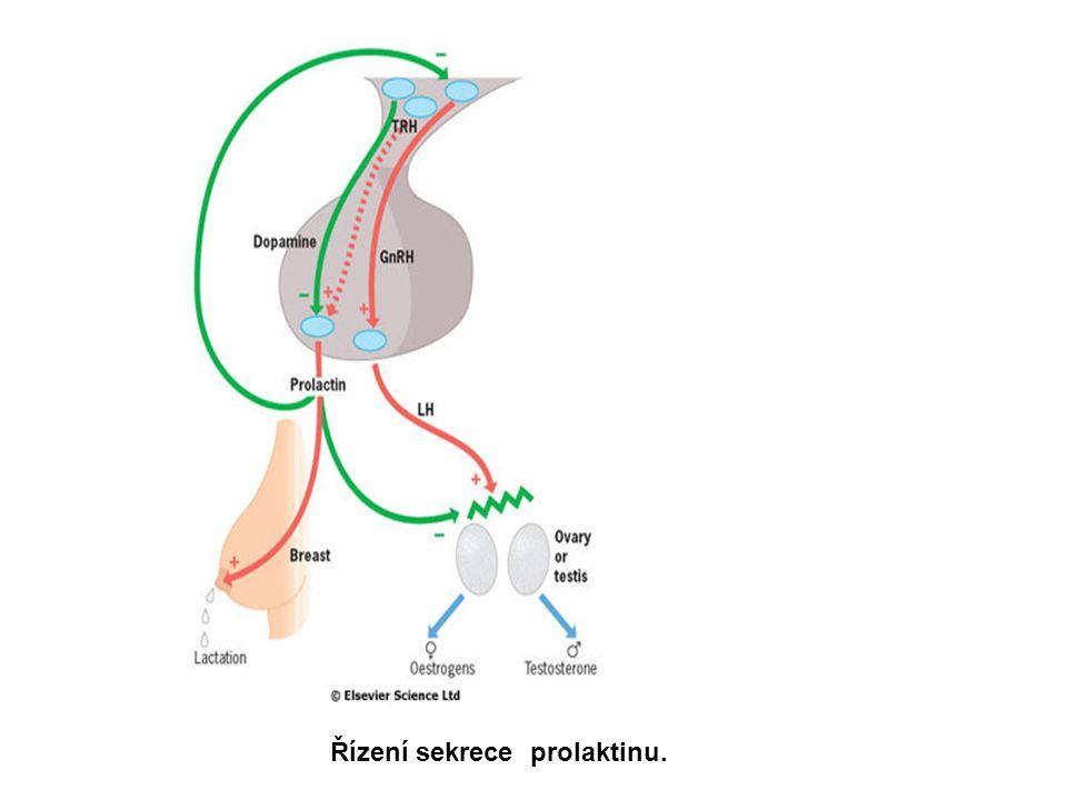 Řízení sekrece prolaktinu.