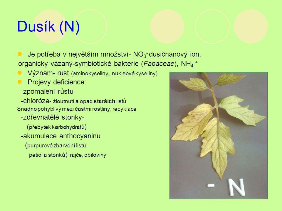 Dusík (N) Je potřeba v největším množství- NO3- dusičnanový ion,