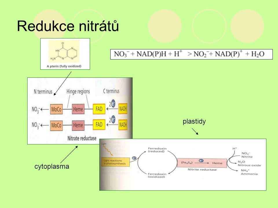 Redukce nitrátů plastidy cytoplasma