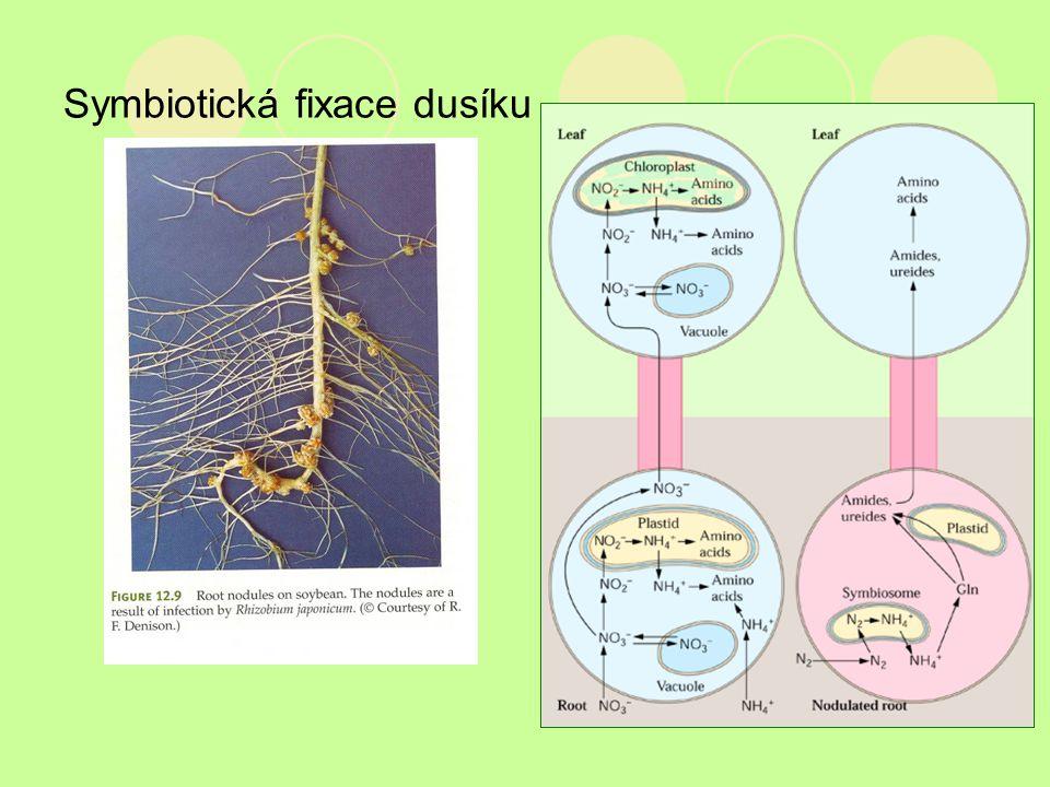 Symbiotická fixace dusíku