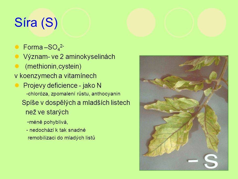 Síra (S) Forma –SO42- Význam- ve 2 aminokyselinách (methionin,cystein)