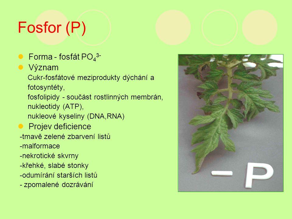 Fosfor (P) Forma - fosfát PO43- Význam Projev deficience