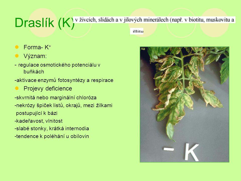 Draslík (K) Forma- K+ Význam: