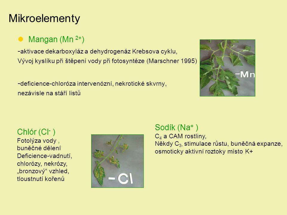 Mikroelementy Mangan (Mn 2+)
