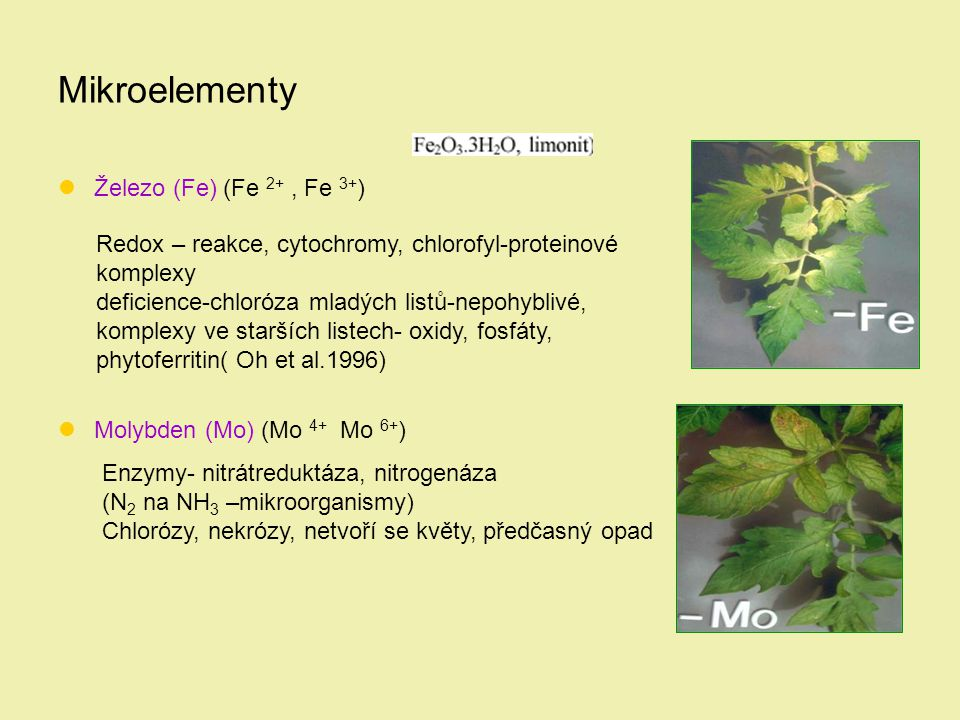 Mikroelementy Železo (Fe) (Fe 2+ , Fe 3+)