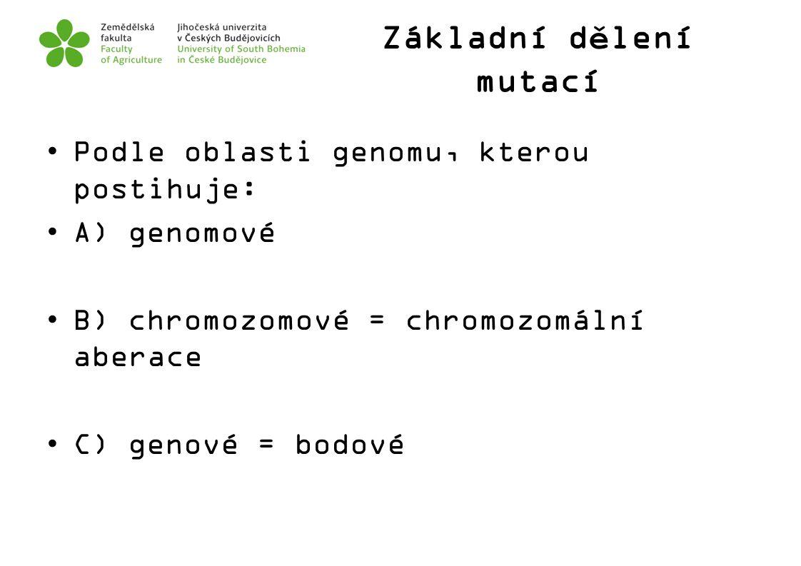 Základní dělení mutací