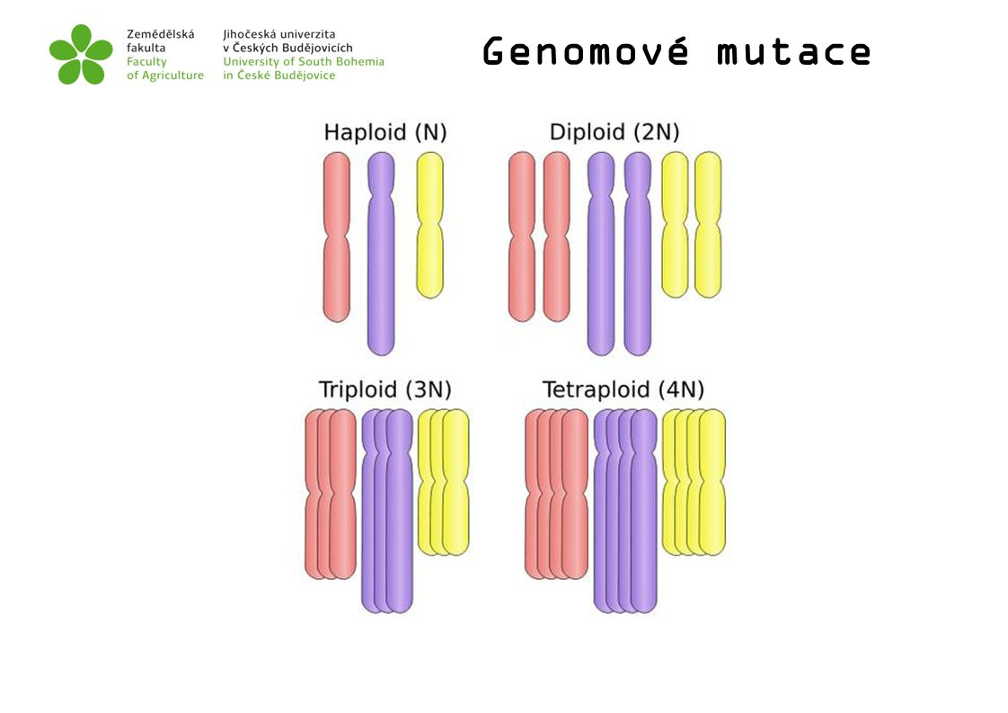 Genomové mutace