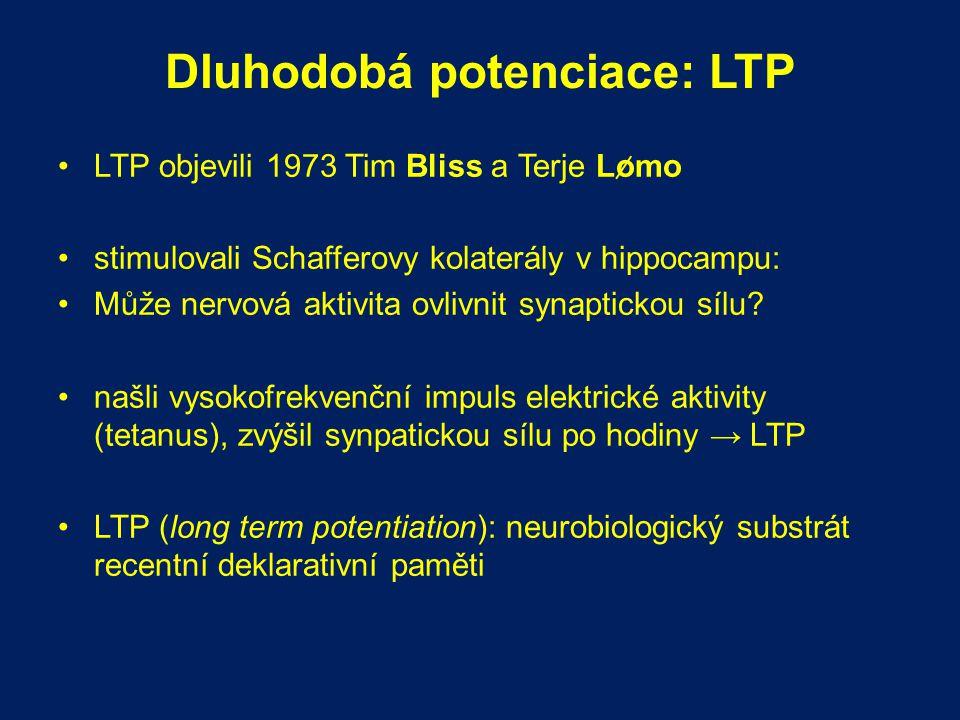 Dluhodobá potenciace: LTP