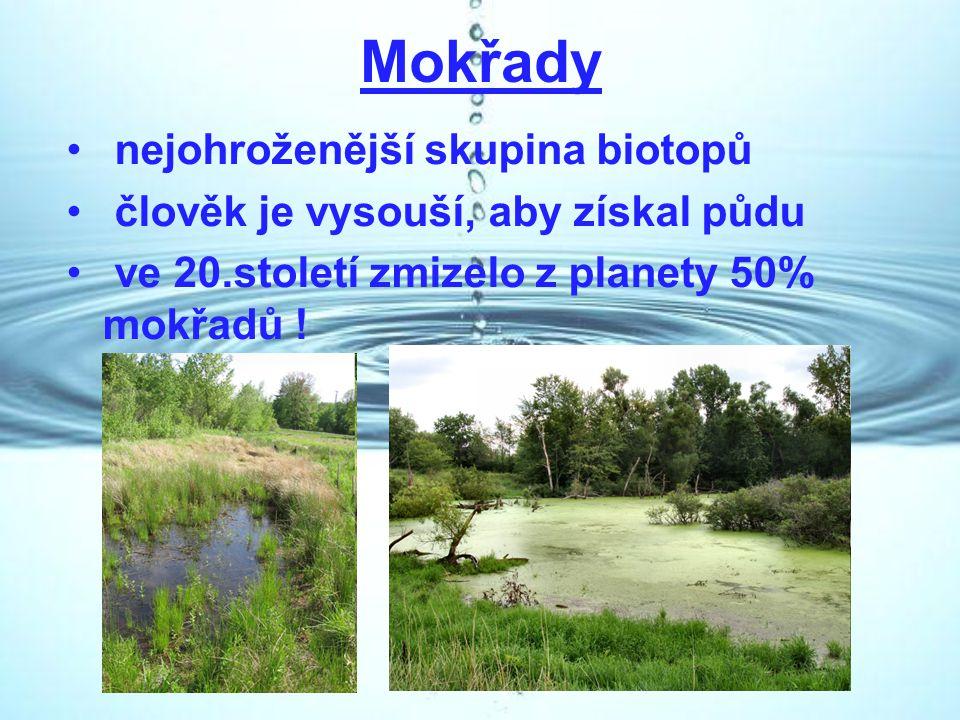 Mokřady nejohroženější skupina biotopů