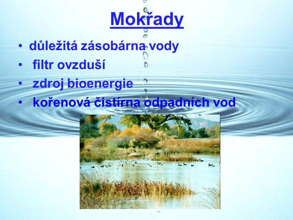 Mokřady důležitá zásobárna vody filtr ovzduší zdroj bioenergie