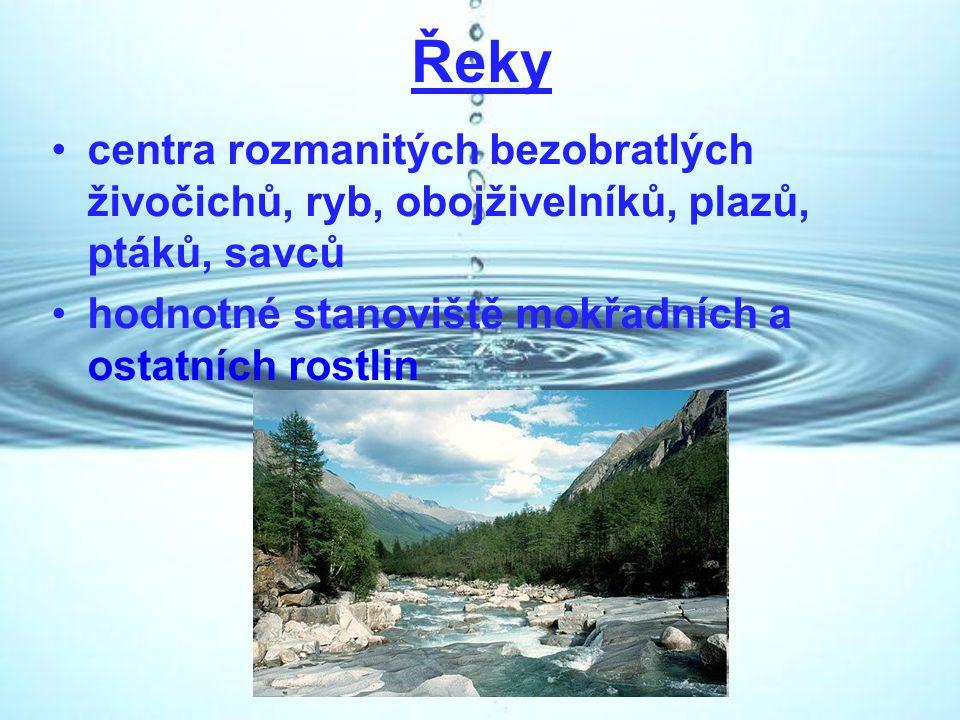 Řeky centra rozmanitých bezobratlých živočichů, ryb, obojživelníků, plazů, ptáků, savců.