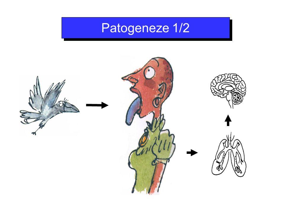 Patogeneze 1/2