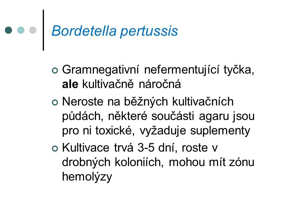 Bordetella pertussis Gramnegativní nefermentující tyčka, ale kultivačně náročná.