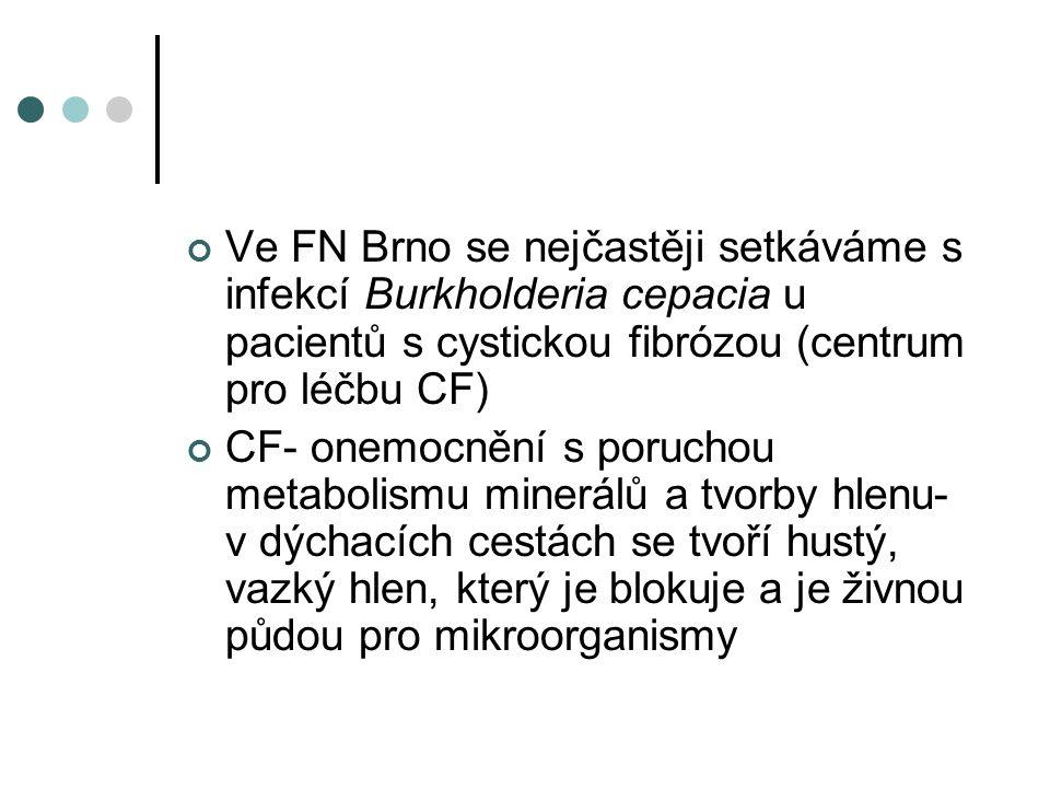 Ve FN Brno se nejčastěji setkáváme s infekcí Burkholderia cepacia u pacientů s cystickou fibrózou (centrum pro léčbu CF)