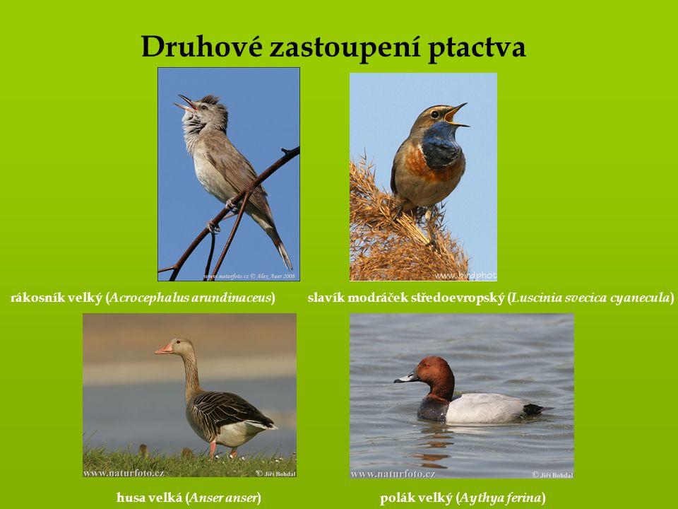 Druhové zastoupení ptactva