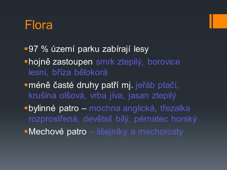 Flora 97 % území parku zabírají lesy