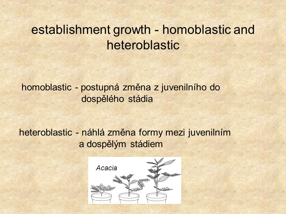 establishment growth - homoblastic and heteroblastic