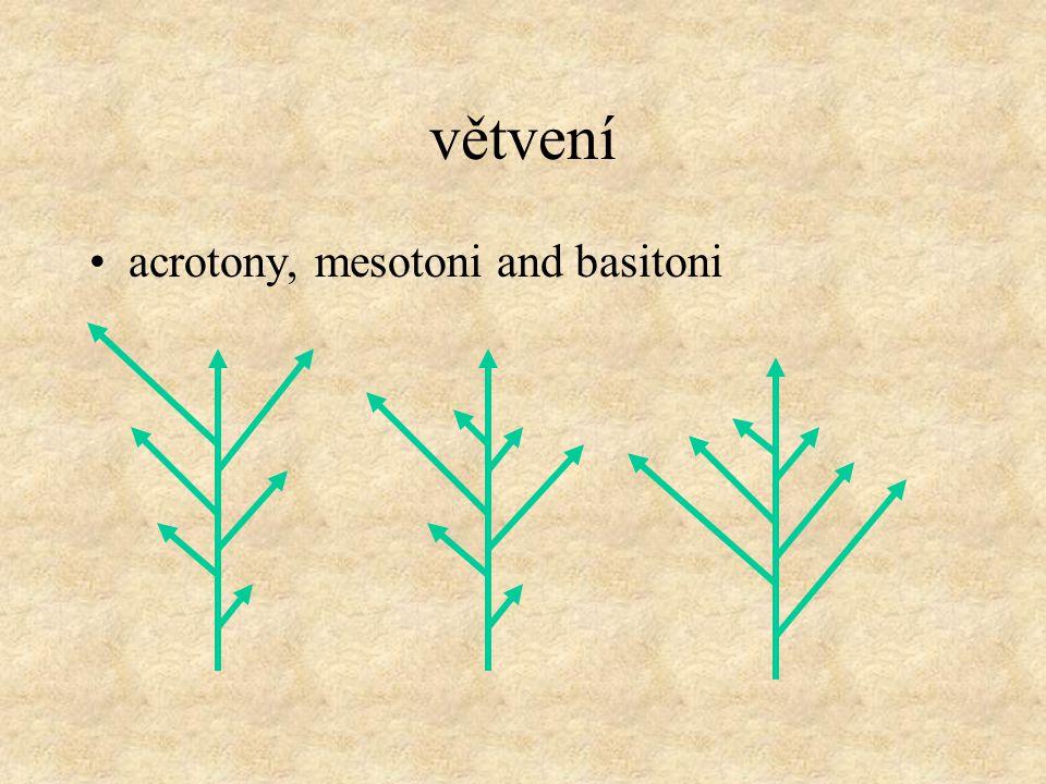 větvení acrotony, mesotoni and basitoni