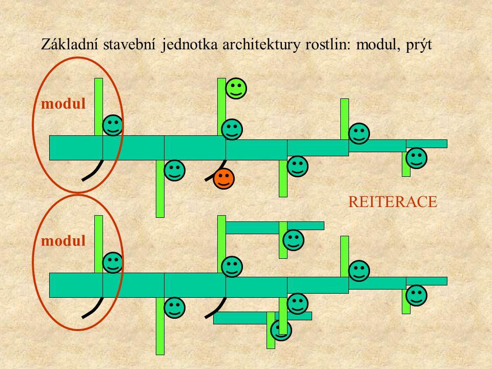 Základní stavební jednotka architektury rostlin: modul, prýt