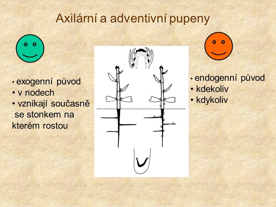 Axilární a adventivní pupeny