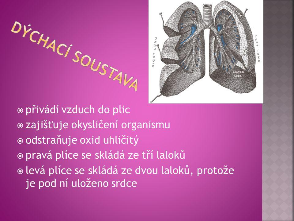 Dýchací soustava přivádí vzduch do plic zajišťuje okysličení organismu