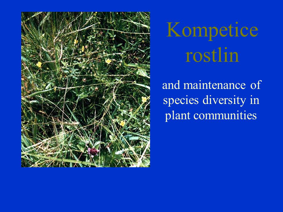 and maintenance of species diversity in plant communities