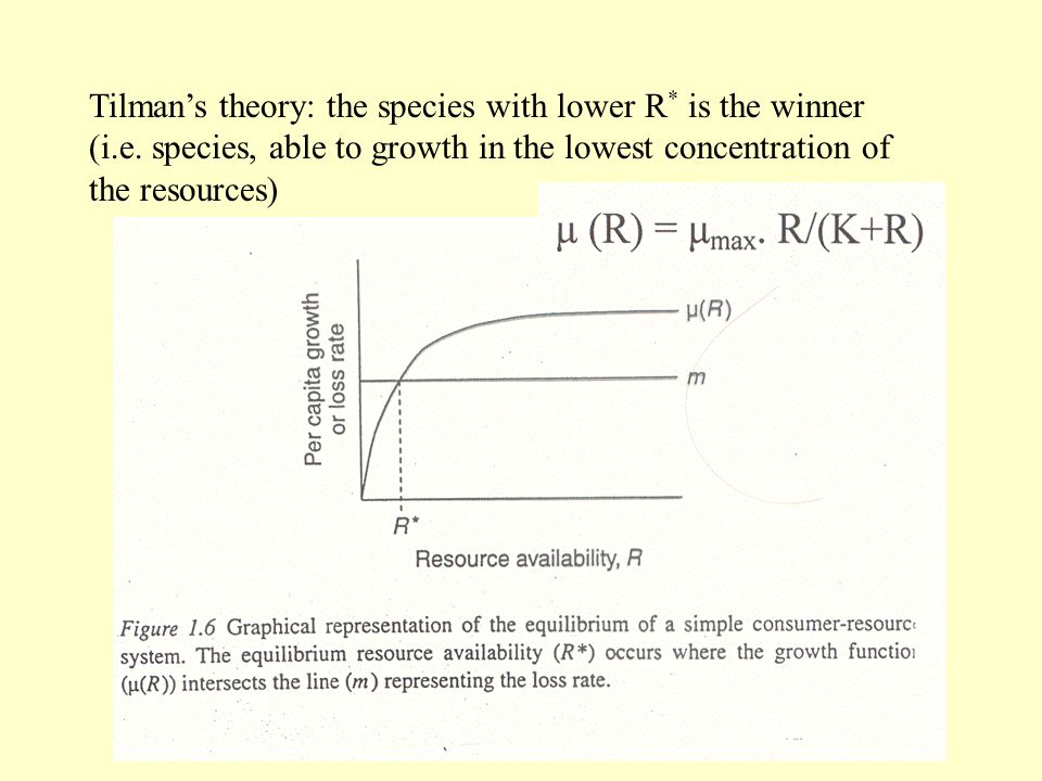 Tilman's theory: the species with lower R. is the winner (i. e