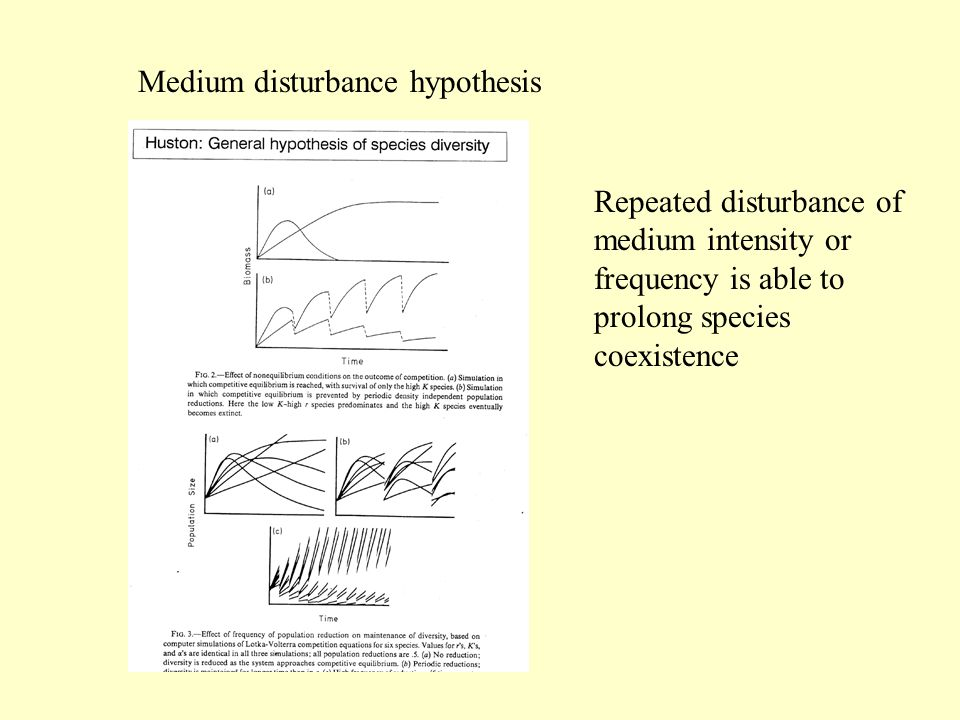 Medium disturbance hypothesis