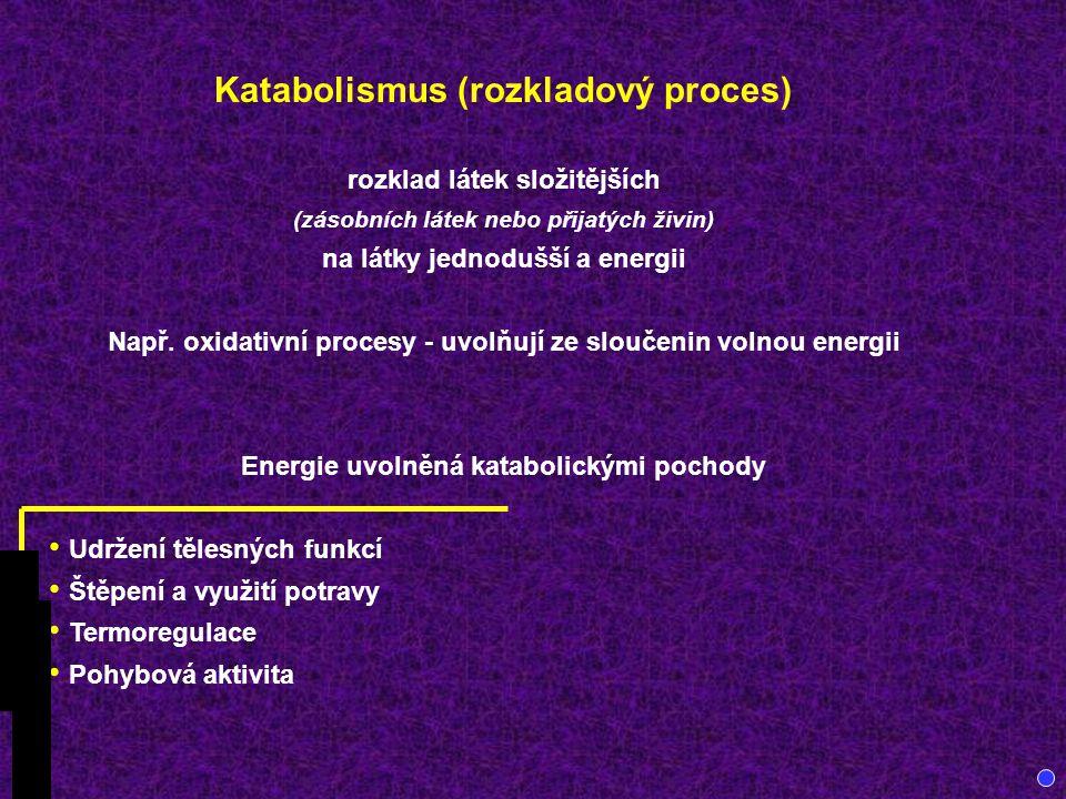 Katabolismus (rozkladový proces)
