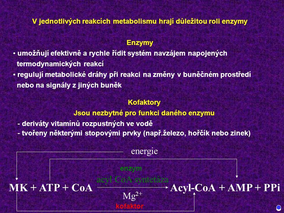MK + ATP + CoA Acyl-CoA + AMP + PPi energie acyl CoA syntetáza Mg2+