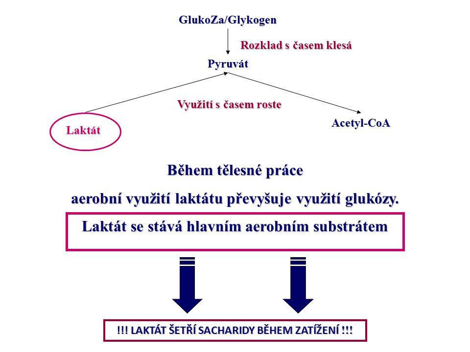 aerobní využití laktátu převyšuje využití glukózy.