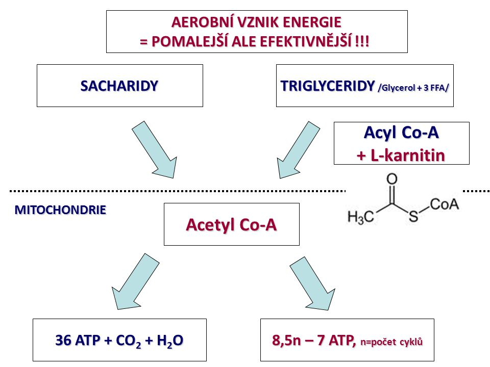 TRIGLYCERIDY /Glycerol + 3 FFA/