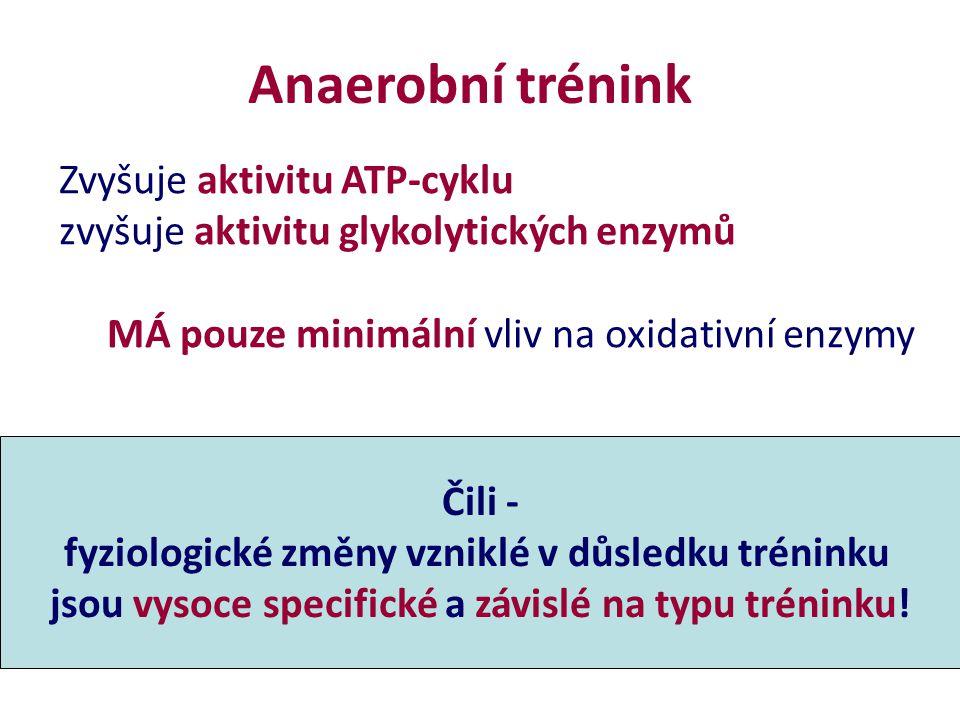 Anaerobní trénink Zvyšuje aktivitu ATP-cyklu