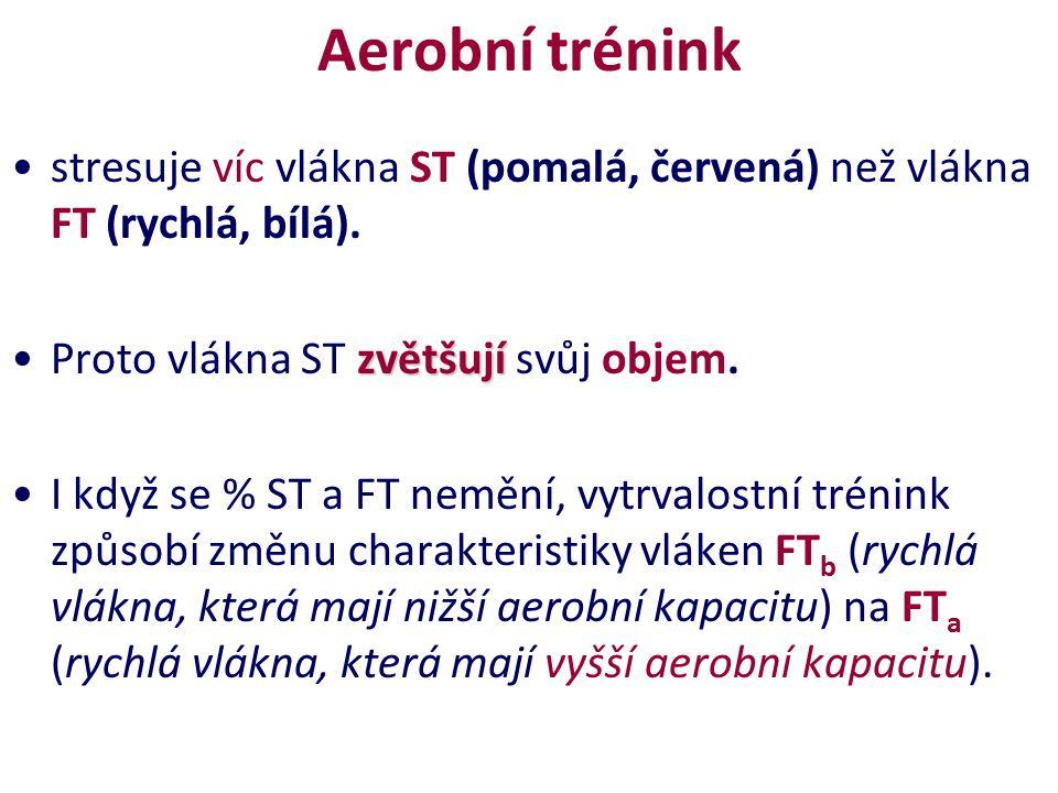 Aerobní trénink stresuje víc vlákna ST (pomalá, červená) než vlákna FT (rychlá, bílá). Proto vlákna ST zvětšují svůj objem.