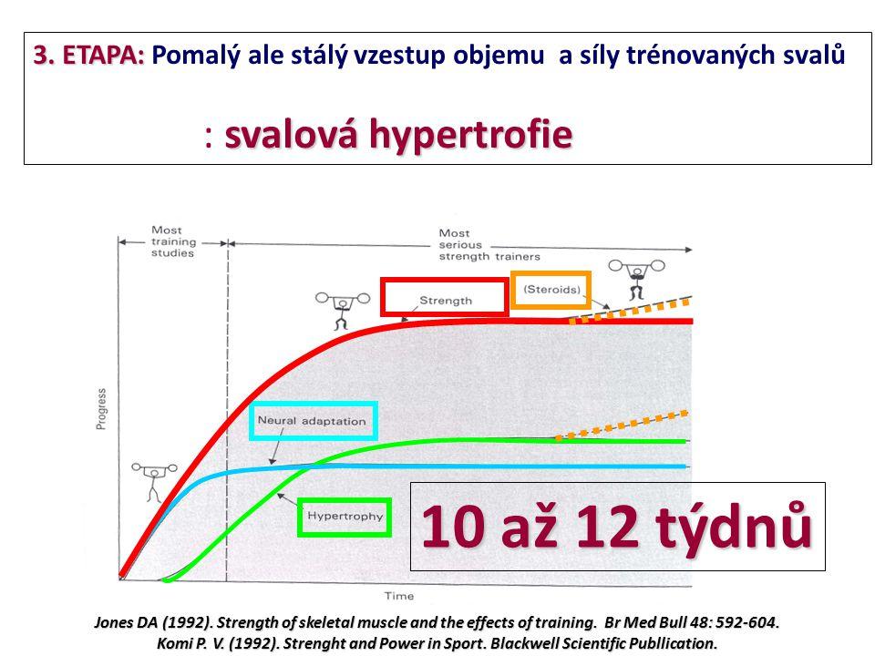 3. ETAPA: Pomalý ale stálý vzestup objemu a síly trénovaných svalů