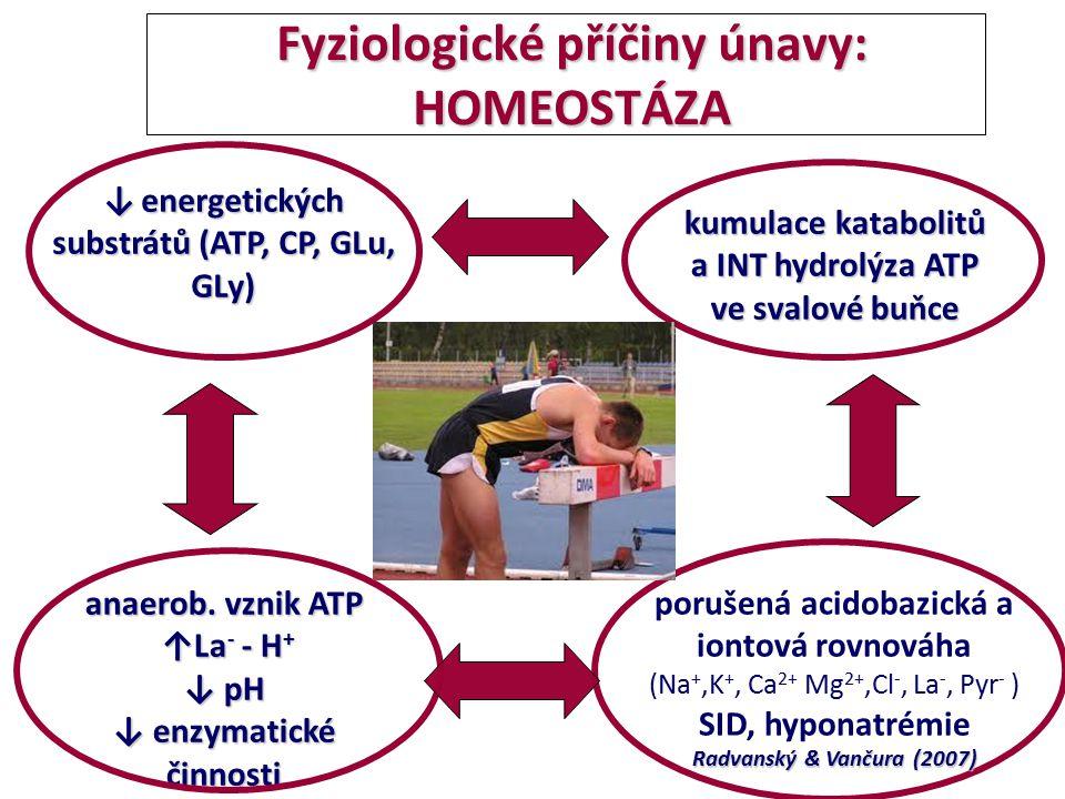 Fyziologické příčiny únavy: HOMEOSTÁZA