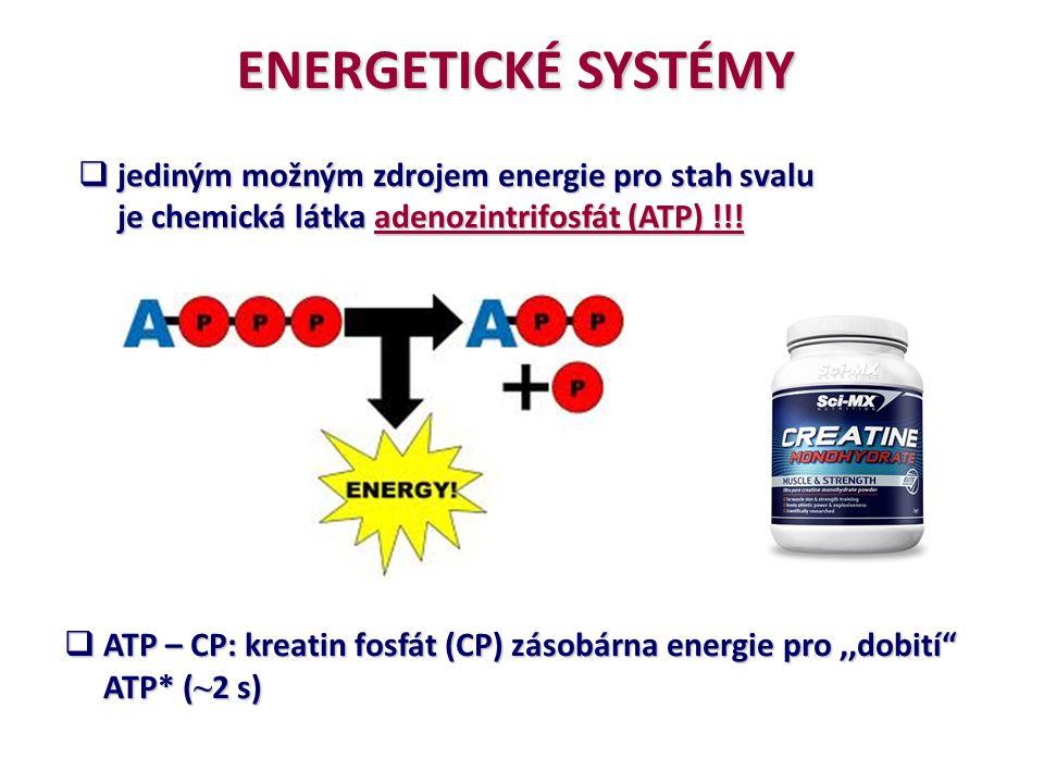 ENERGETICKÉ SYSTÉMY jediným možným zdrojem energie pro stah svalu