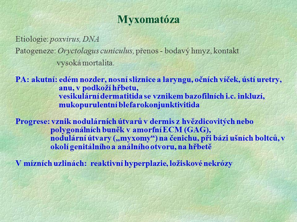 Myxomatóza Etiologie: poxvirus, DNA