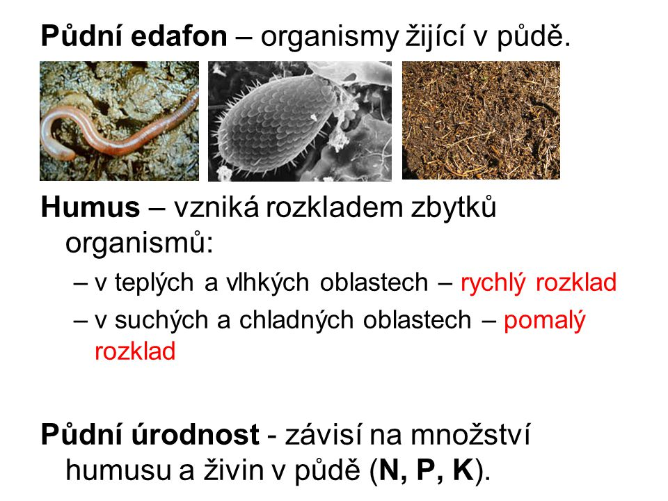 Půdní edafon – organismy žijící v půdě.