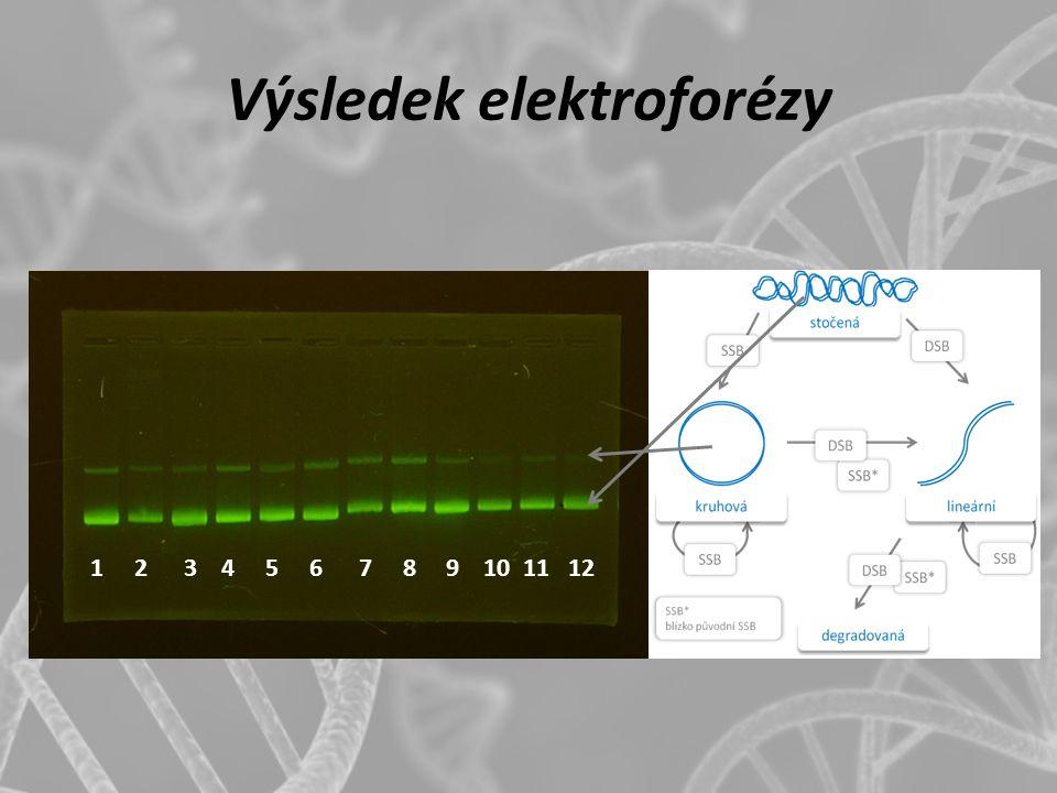 Výsledek elektroforézy