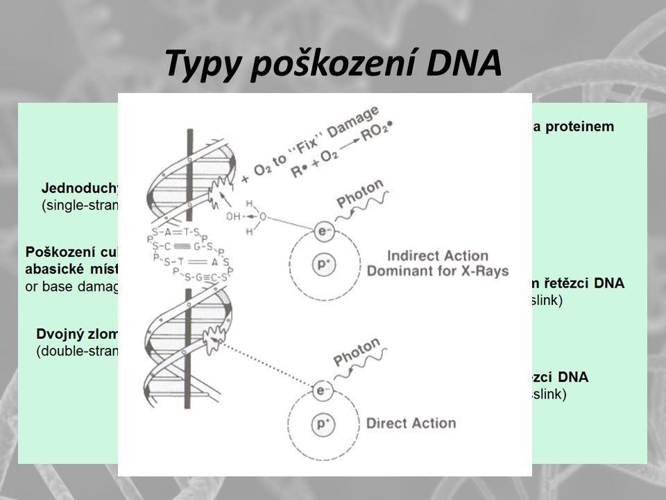 Typy poškození DNA