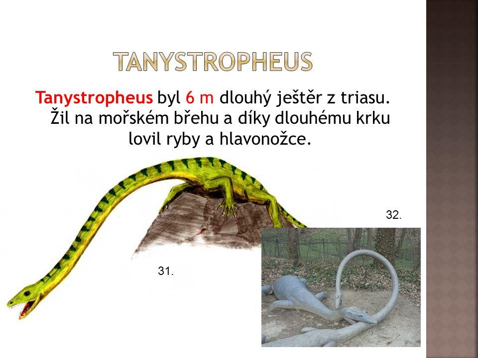 tanystropheus Tanystropheus byl 6 m dlouhý ještěr z triasu. Žil na mořském břehu a díky dlouhému krku lovil ryby a hlavonožce.