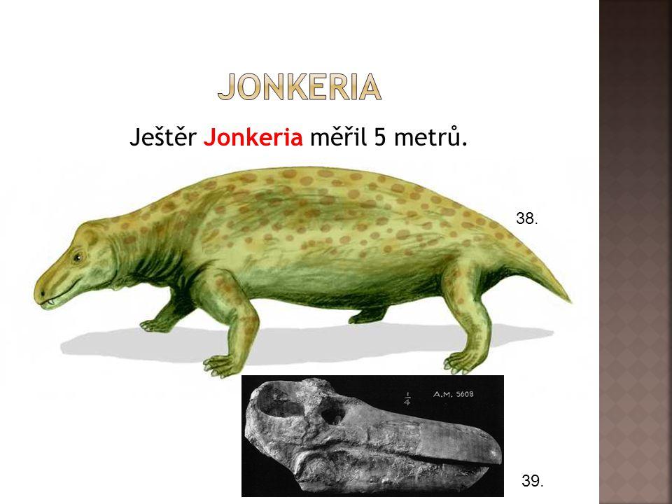 Ještěr Jonkeria měřil 5 metrů.