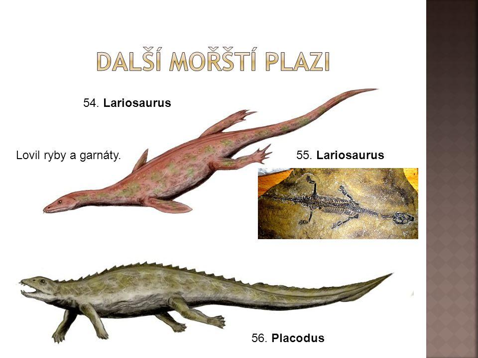 Další mořští plazi 54. Lariosaurus Lovil ryby a garnáty.