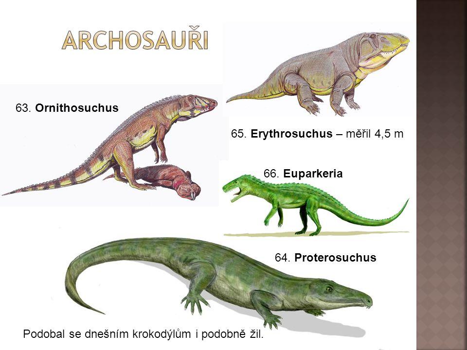 archosauři 63. Ornithosuchus 65. Erythrosuchus – měřil 4,5 m