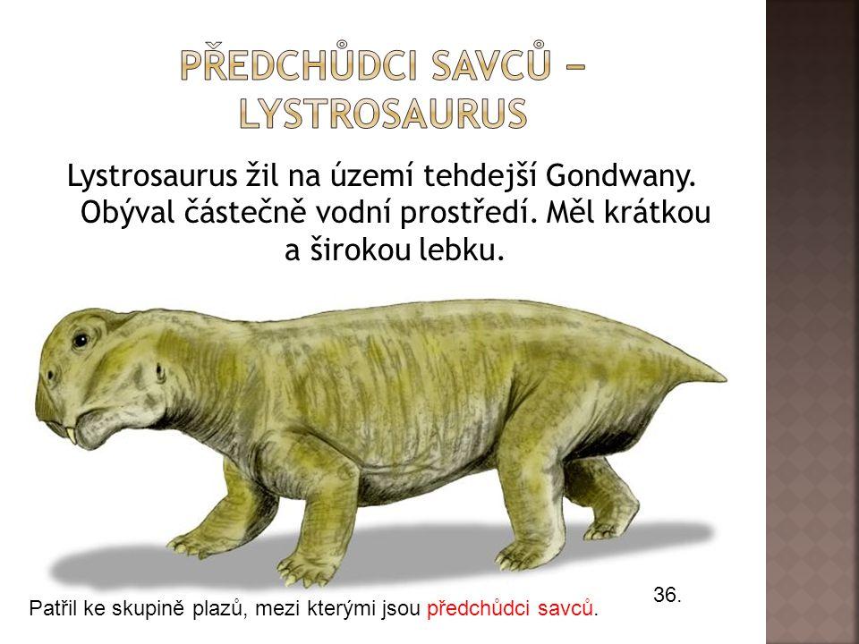 Předchůdci savců − lystrosaurus