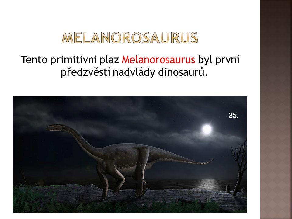 melanorosaurus Tento primitivní plaz Melanorosaurus byl první předzvěstí nadvlády dinosaurů. 35.