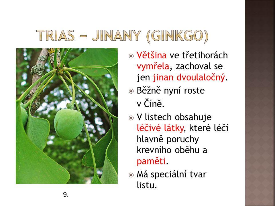 Trias − jinany (ginkgo)