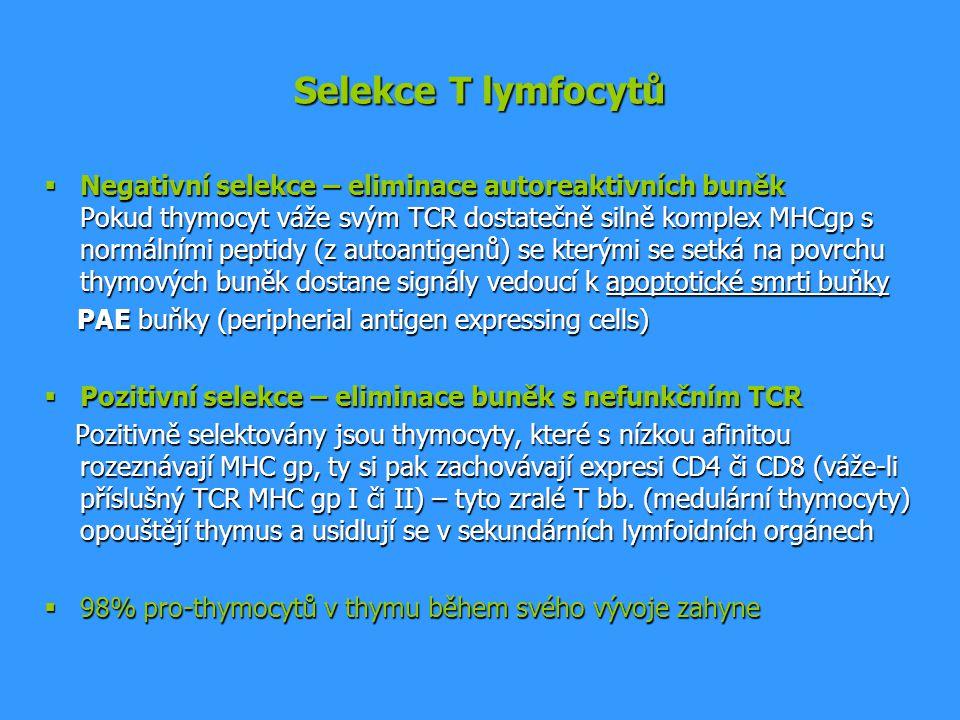 Selekce T lymfocytů